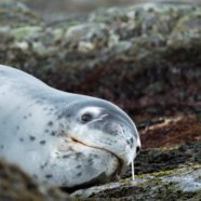 'Weirdest Set of Coincidences in My Life.' Scientists Tracked Down the Owner of a USB Stick Found in Frozen Seal Feces