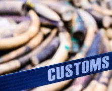 Chinese 'Ivory Queen' Gets 15-Year Sentence in Tanzania for Smuggling Elephant Tusks