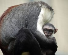 'The Numbers Are Just Horrendous.' Almost 30,000 Species Face Extinction Because of Human Activity