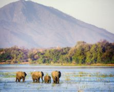 Amid Drought, At Least 55 Elephants Have Starved to Death in Zimbabwe's Largest National Park